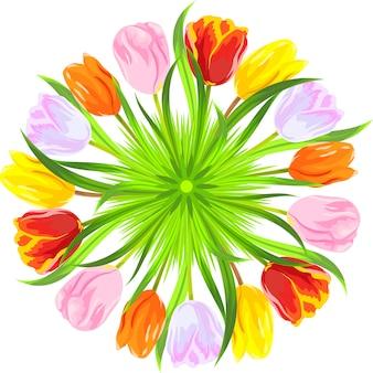 Círculo de tulipanes rojos, amarillos, rosados, naranjas, blancos en una hierba verde clara aislada