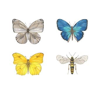 Clipart de mariposas acuarela aislado