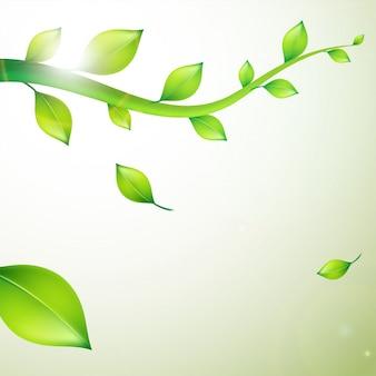 Closeup vista de la naturaleza de las hojas verdes, hojas verdes naturales.