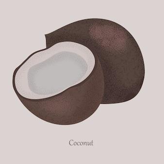 Coco, coco dulce fruta tropical entera y media.