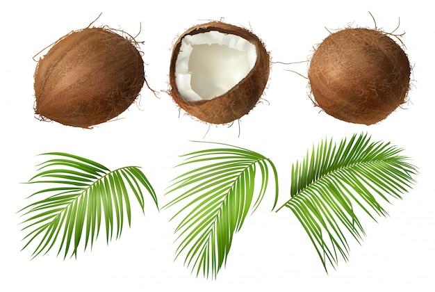 Coco entero y roto con hojas de palma verde.