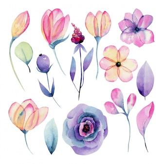 Colección de acuarela aislado flores de color rosa y morado, ilustración pintada a mano