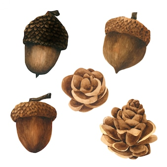 Colección de acuarela de cono de pino sobre fondo blanco