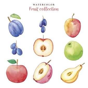 Colección acuarela de frutas de otoño de sorteo de mano