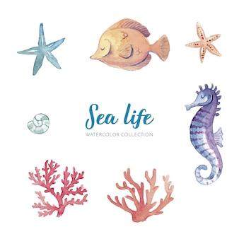 Colección de acuarela de vida marina