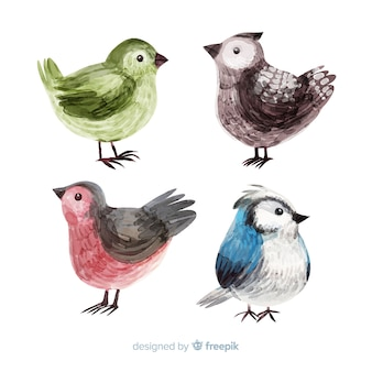 Colección de acuarelas pájaros de otoño