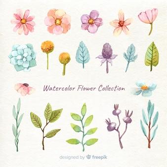 Colección adorable de flores en acuarela