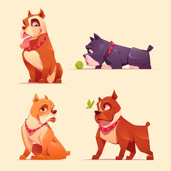 Colección adorable pitbull de dibujos animados
