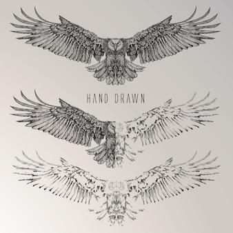 Colección de águilas dibujadas a mano