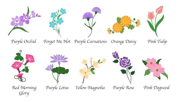 Colección aislada de flores de jardín botánico de naturaleza orgánica