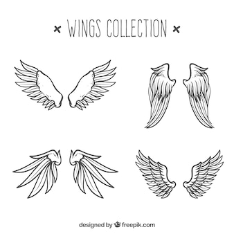 Colección de alas dibujadas a mano