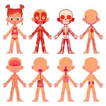 Colección de anatomía de dibujos animados para niños