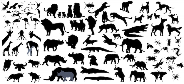 Colección de animales aislada sobre fondo blanco