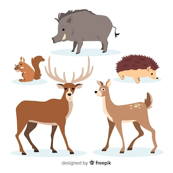 Colección de animales de bosque dibujados a mano