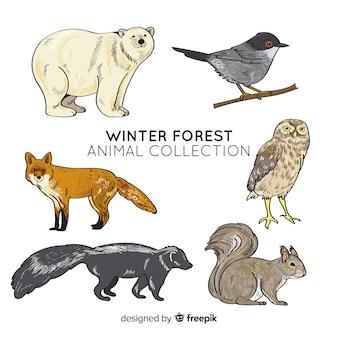 Colección de animales de bosque en invierno
