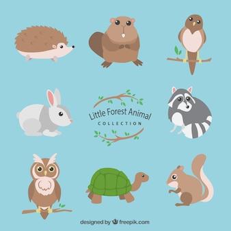 Colección de animales de bosque pequeños