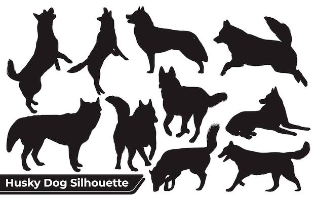 Colección de animales husky dog en diferentes posiciones.