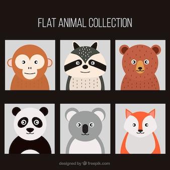 Colección de animales planos