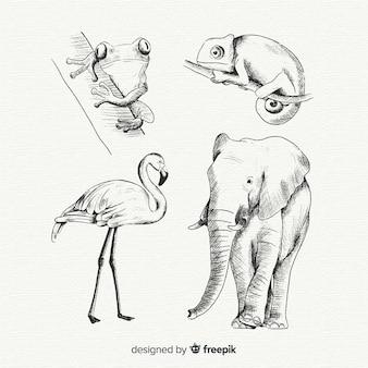 Colección animales tropicales dibujados a mano