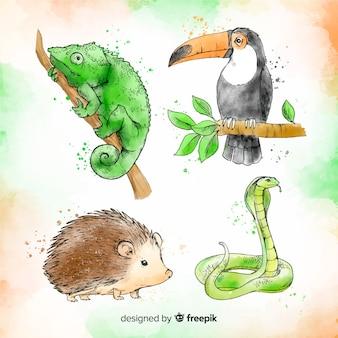 Colección de animales tropicales estilo acuarela
