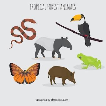 Colección de animales tropicales y salvajes