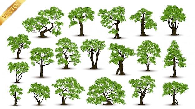Colección de árboles realistas aislados sobre fondo blanco
