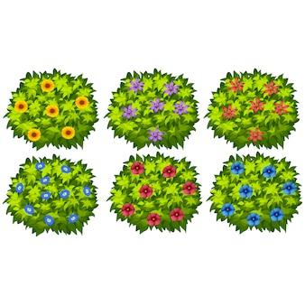 Colección de arbustos a color