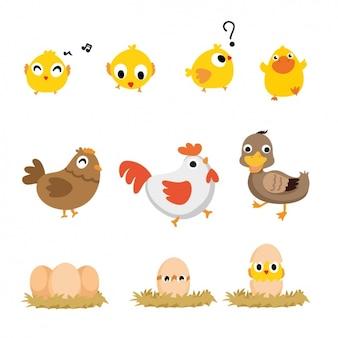 Colección de aves a color