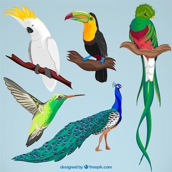 Colección de aves exóticas dibujadas a mano