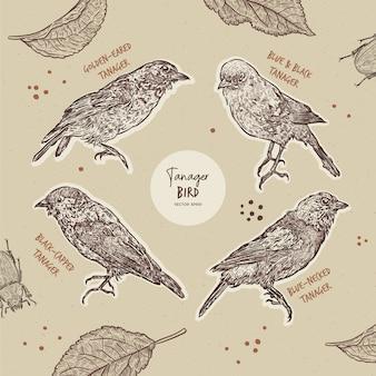 Colección de aves tangara, boceto dibujar a mano.
