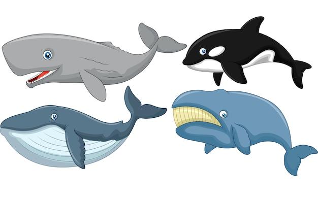 Colección de ballenas de dibujos animados