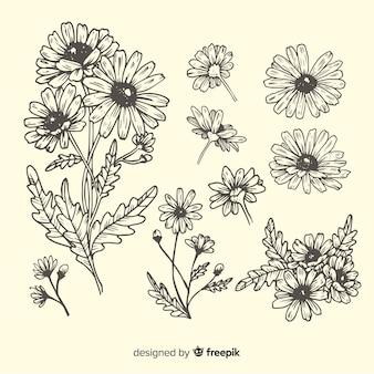 Colección bocetos margaritas dibujadas a mano