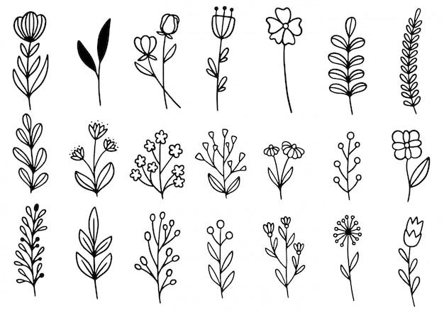 Colección bosque helecho eucalipto arte follaje natural hojas hierbas en estilo de línea. belleza decorativa elegante ilustración para diseño flor dibujada a mano