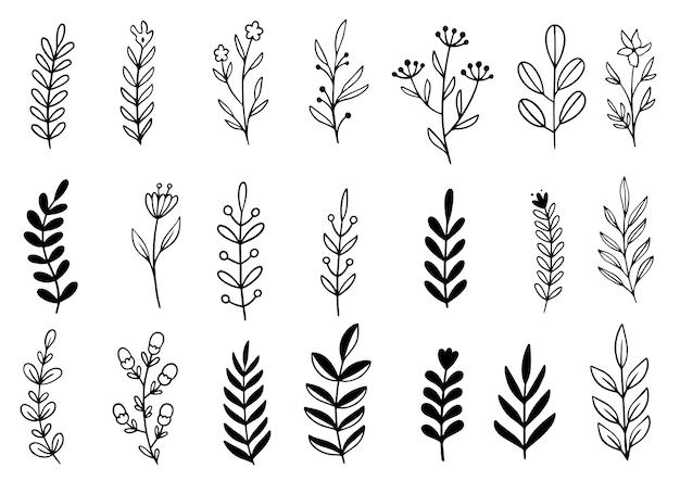 Colección bosque helecho eucalipto arte follaje natural hojas hierbas en estilo de línea.
