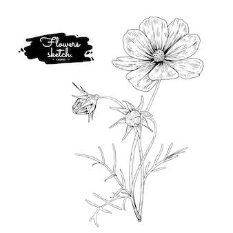 Colección de botánica floral sketch, dibujos de flores cosmos.