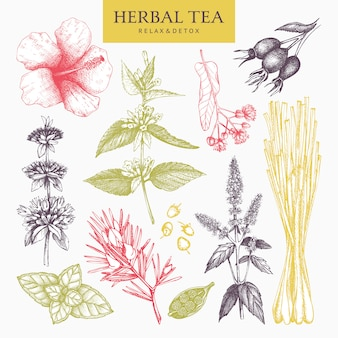 Colección botánica de ingredientes de té de hierbas hechos a mano. pastel decorativo conjunto de hierbas vintage y bosquejo de especias. ilustración