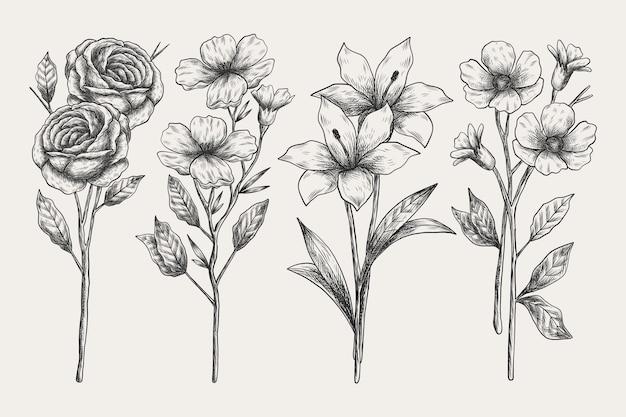 Colección de botánica realista dibujada a mano