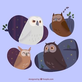 Colección de búhos de noche