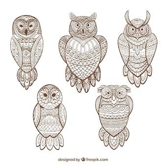 Colección de búhos ornamentales dibujados a mano