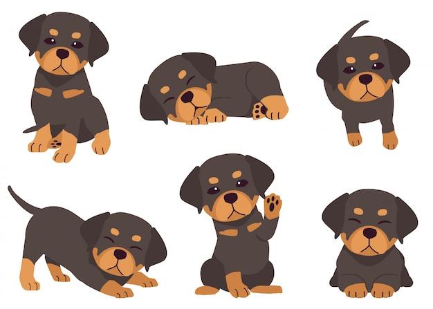 La colección de cachorros rottweiler en muchas acciones