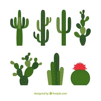 Colección de cactus altos