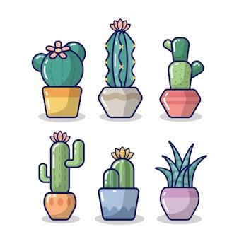 Colección de cactus en blanco