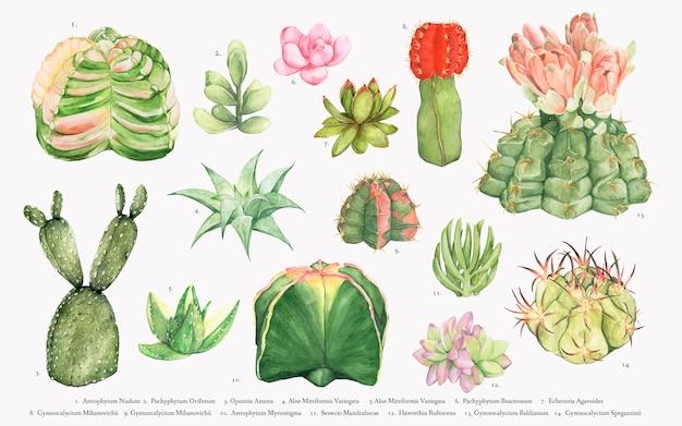 Colección de cactus dibujados a mano