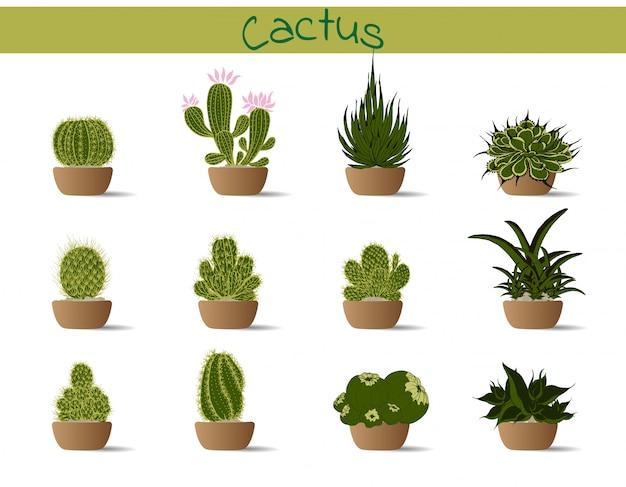 Colección de cactus en una olla