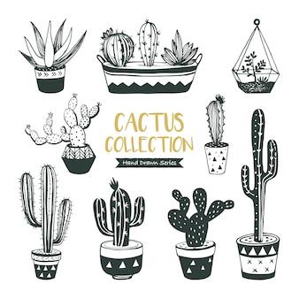 Colección de cactus y suculentas dibujados a mano.