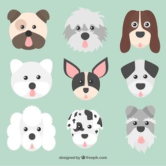 Colección de caras de perros de diferentes razas