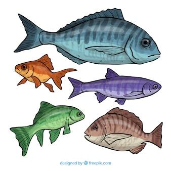 Colección de cinco diferentes peces