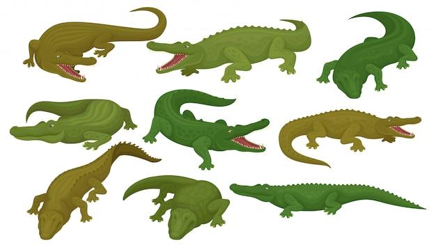 Colección de cocodrilos, animales anfibios depredadores en diferentes poses ilustración sobre un fondo blanco.