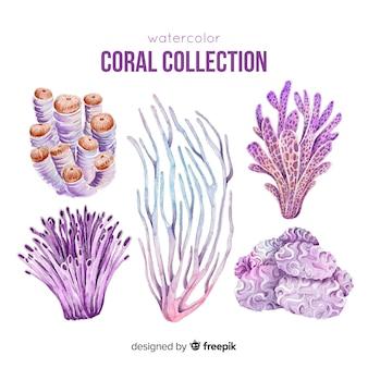 Colección colorida coral dibujado a mano