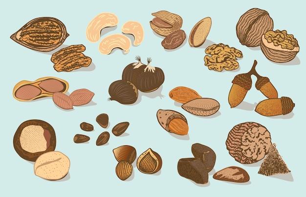 Colección colorida de frutos secos orgánicos naturales